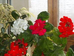 Как создать красивую композицию из комнатных растений?